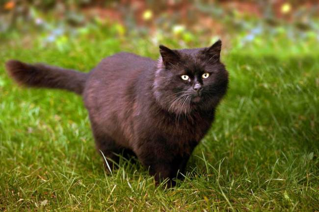 gato-coelho-caerbannog-cálice-sagrado